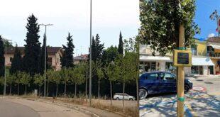 Giulianova, 35 nuove essenze arboree in via Prato e Case di Trento